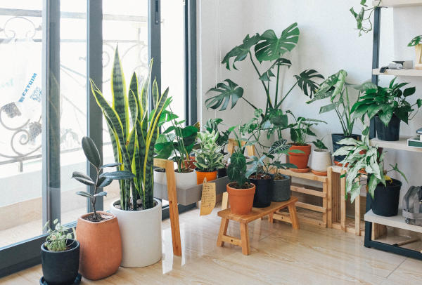 Your Plants will Love the Venta Airwasher